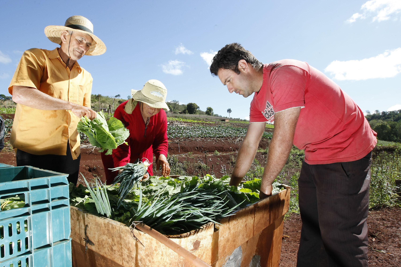 Agricultura Familiar, Cidade de Arapongas, familia de João Paulo e seus pais na horta. 24-09-13. Foto: Hedeson Alves